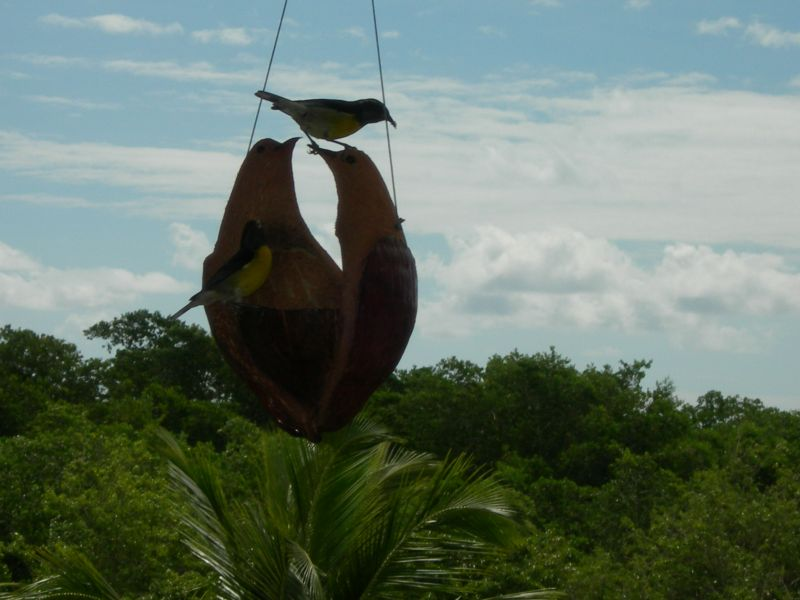 Vue de la terrasse Location Appartement 66397 Sainte Anne (Guadeloupe)