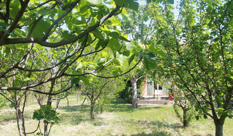 Jardin Location Maison 100030 Avignon