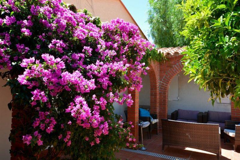 Vue de la terrasse Location Maison 114513 Collioure