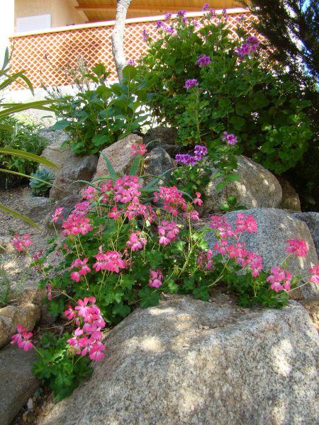 Jardin Location Villa 79457 Propriano