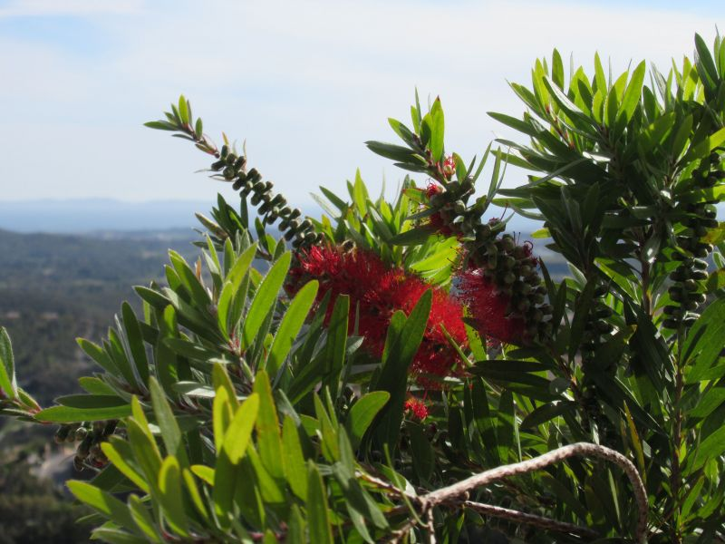 Jardin Location Villa 98154 La Londe les Maures